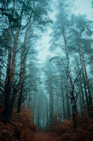 Atmospheric woods by HendrikMandla