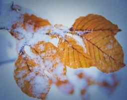 Winter leaf 1 by paradoxofminds