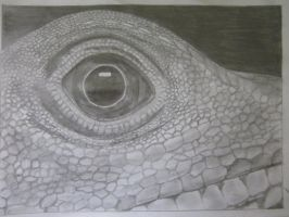 Lizards eye by 666Devil-in-disguise