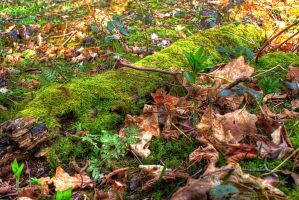 The Moss-covered Log... by TheBaldingOne