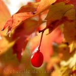Colours of Fall by Cherille
