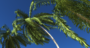 Palms by ExtremeProjects