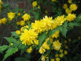 Flowering Yellow by smogsy