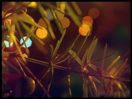 Christmas Summer bokeh by AuRa90