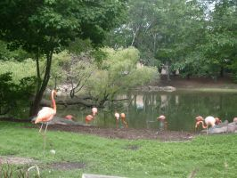 Pink Flamingos by godtony3
