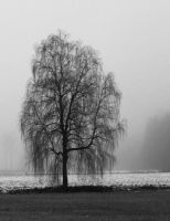 Birch in the mist by Skycode