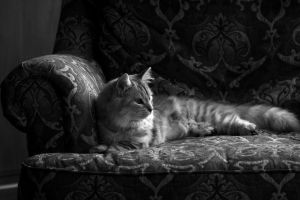 BW Cat no. 3 by Mischi3vo