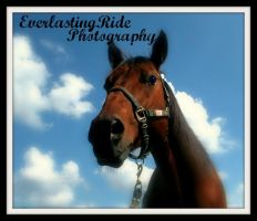 EverlastingRide Photography by EverlastingRide