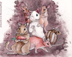The Order Rodentia I by MoonsongWolf