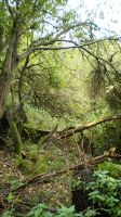 Forest scene 3 by The-Mattness