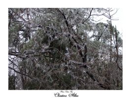 Ice Trees - Icy South 5 by Liquid-angelicGrace