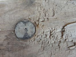 Wood Texture 36 by Ox3ArtStock