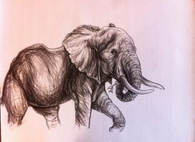 African elephant by Bisanti