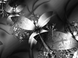 Black and White II by Anaesthetica