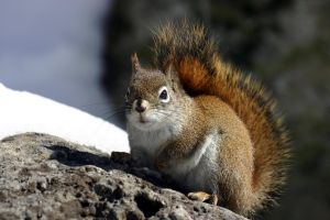 I Want Some Nuts by marmots