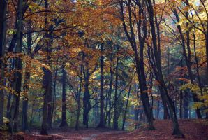 Autumn walk III by Wilithin