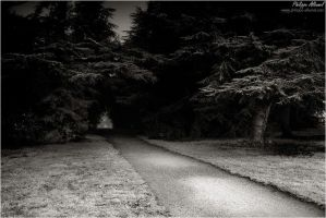 Lost Soul Forest by Philippe-Albanel