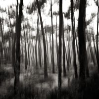 Lost in forest v by etchepare