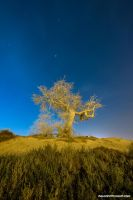 Ghost Tree by VerticalDubai