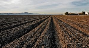 Plowed and Planted by Allen59