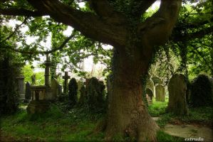 The Tree of Past life by Estruda