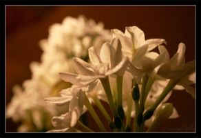 White Beauties by Astraea-photography