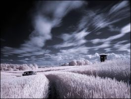 Wheatfield infrared by MichiLauke
