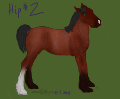 Foal - SOLD by patchesofheaven74