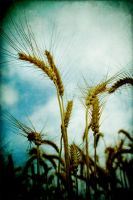 harvest time again by S-t-r-a-n-g-e