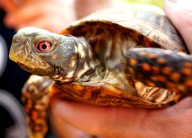 Tortuga by PhotoSqrl