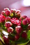 Early Blossom by Lambii