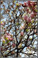 grown to trust by scarify11
