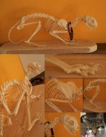 Cat Skeleton SOLD by Myskullcabinet