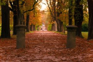 Boulevard in autumn by luka567