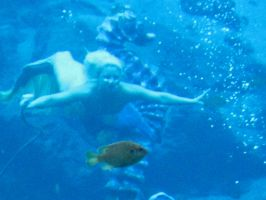 079 Weeki Wachee Springs by crazygardener