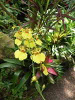 Yellow Orchids by dmguthery
