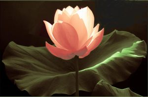 The Lotus by thekslayer