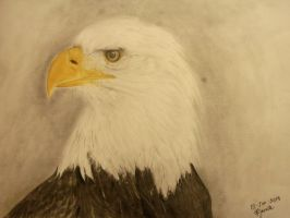 Bald Eagle by fibergraphite