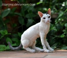Toodles doll -more photos by LisaToms