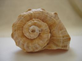 Beach Shell Stock One by Tefee-Stock