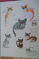 Warrior Cats Sheet 4 by dawnflower8
