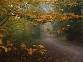 Autumn Fog at Burnaby Central Park, 10-18-2013 by anonymous-dreams