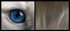 White cat - close up by Linuska