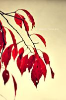 Red Leaves by teresastreasures72