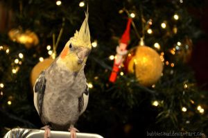 Loofy's first Xmas ii by BubbleCloud