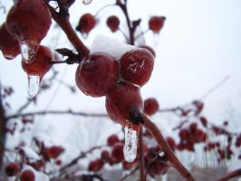Frozen Berries by Pentacle5