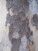 Tree Bark 3 by element321