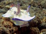 Nudibranch 26 by nathy21