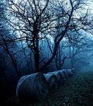 sleepy hollow by DavidSchermann