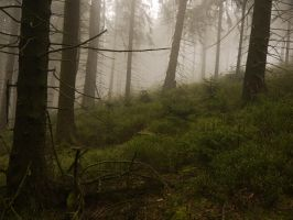 A morning in Lothlorien 44 by Dragoroth-stock